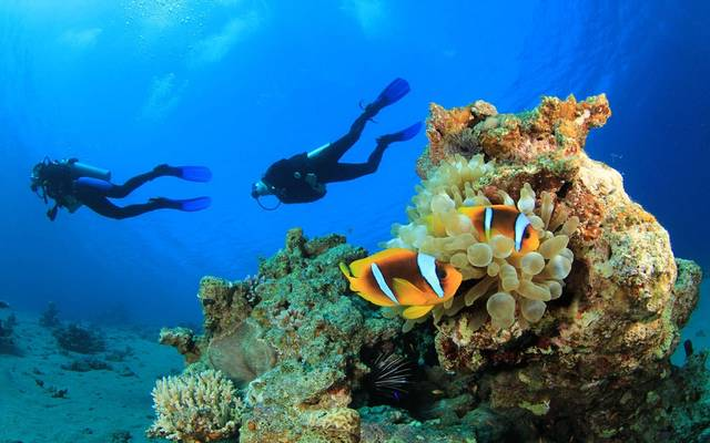 مصر تعلن إرجاء العمل بقرار رسوم المحميات الطبيعية الجديد