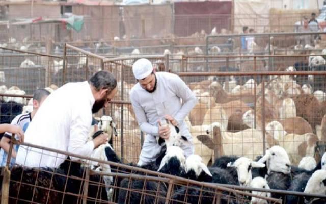 مشروع المملكة السعودية للإفادة من الهدي والأضاحي أنشئ منذ 1983