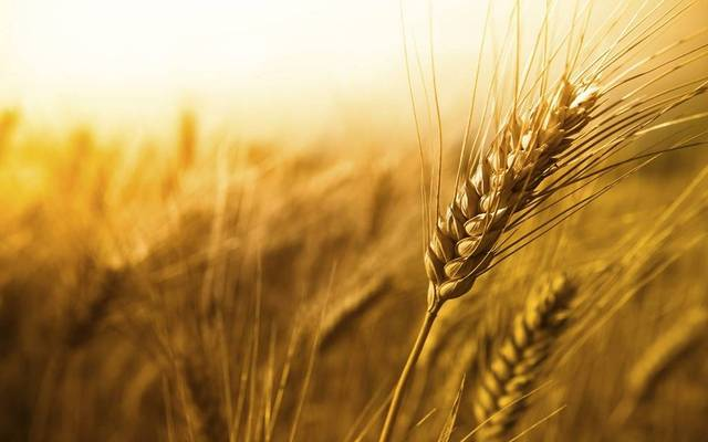 Egypt imported 11 million tonnes of wheat in 2018