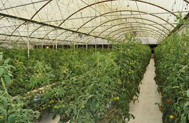Starting an Organic Farm & Greenhouse -Sample Business Plan Template