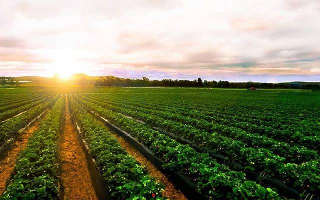 مشروعات زراعية