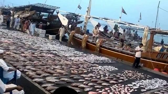 أحد موانئ صيد الأسماك في الإمارات