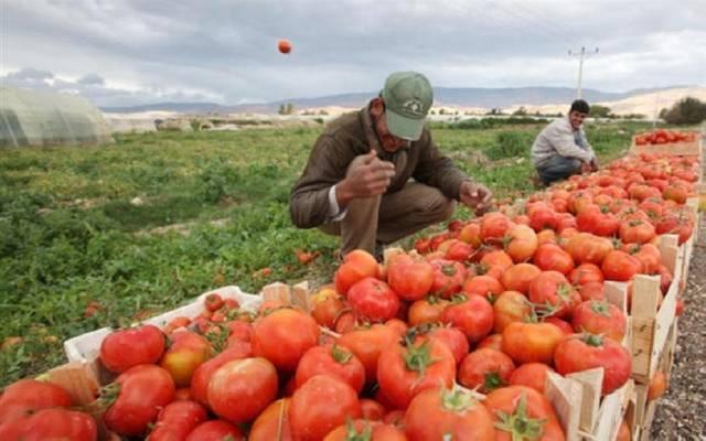 منتجات زراعية - مصر
