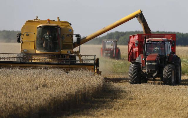 التموين المصرية: توريد 2.2 مليون طن قمح محلي من المزارعين