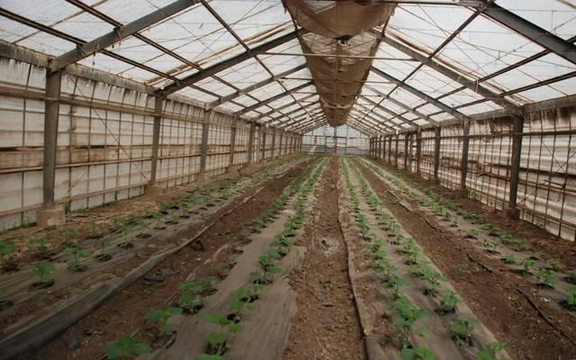 مصر تستهدف زراعة 400 صوبة في جنوب سيناء خلال 2020