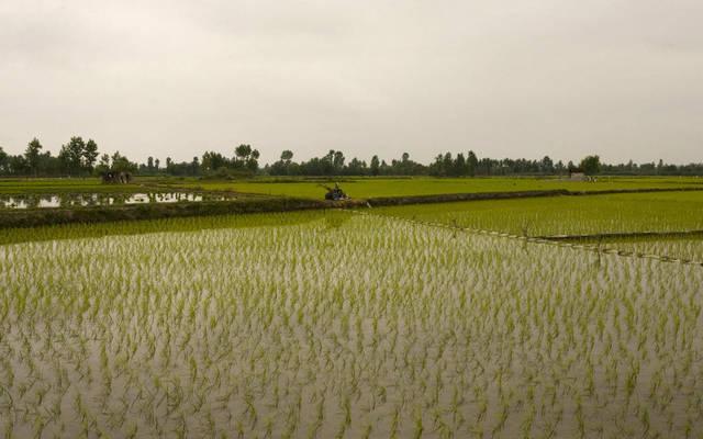 توزيع 2.55 مليون سهم مجاني لزيادة رأس المال- الصورة من رويترز أريبيان آي