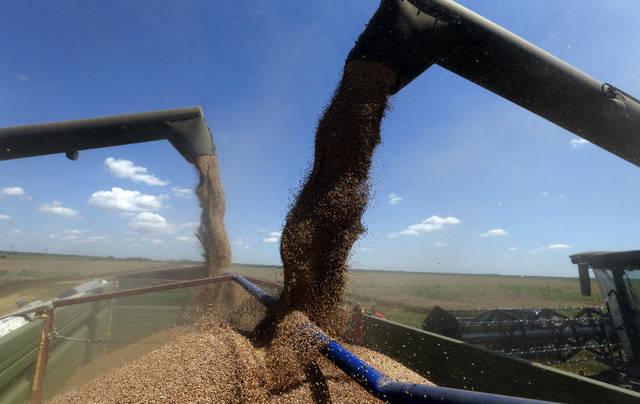 تحميل القمح ـ أرشيفية