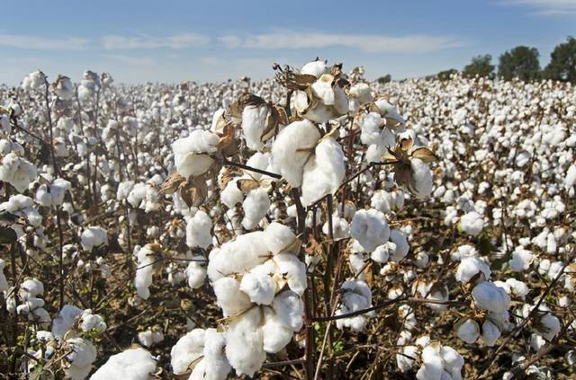 Arab Cotton Ginning will be added as a new shareholder in the company
