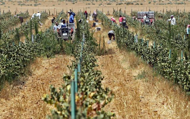 الاستثمار في المجال الزراعي أحد أنشطة الشركة