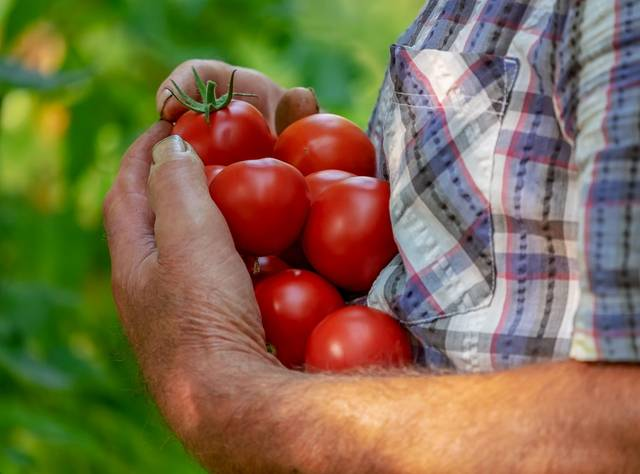 The crops to be exported include tomatoes, pepper, aubergine, onions, and lemons.