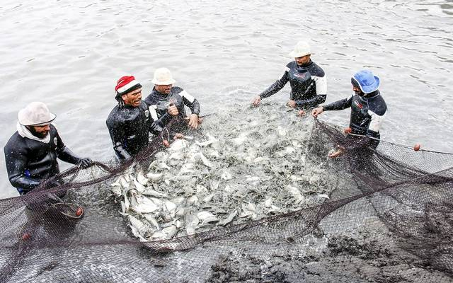 ارتفاع خسائر السعودية للأسماك 29% بالربع الثاني رغم زيادة المبيعات