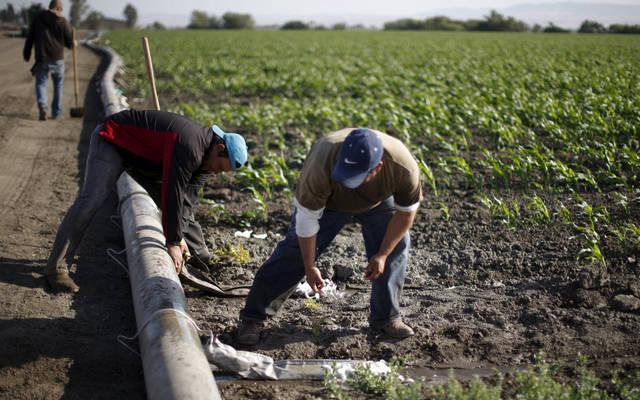 عمال في أحد الحقول الزراعية