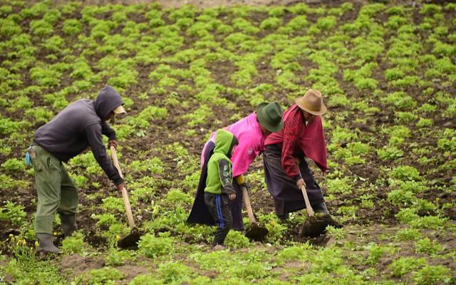 """""""الخدمات"""" و""""الفلاحة"""" الأكثر توفيراً لفرص العمل في المغرب عام 2019"""